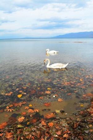 Tri ditë fshatare rreth Liqenit të Dritës