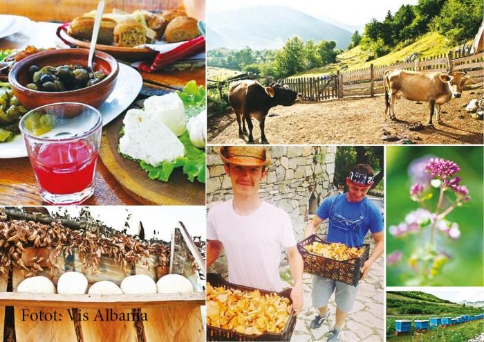 VIS Albania dhe krijimi i Aleancës Slow Food të Kuzhinierëve në Shqipëri